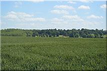 TL5135 : Rolling Essex landscape by N Chadwick