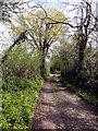 SX8469 : Track from Rydonball Cross to Oldbarn Cross by Tony Atkin