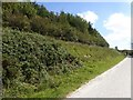 SK1364 : Woodland near Cotesfield Farm by David Smith