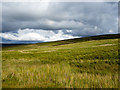 NY6846 : Grassy moorland of Park Fell by Trevor Littlewood