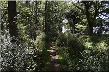 TL5334 : Harcamlow Way, Rosy Grove by N Chadwick