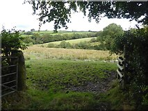 SX5594 : Field between Dry Lane and Hookmoor Brook by David Smith