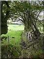 SX5694 : Hedgebank and fence - field boundary near Kigbeare Cross by David Smith