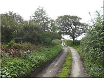 SX5598 : Road leading south from Westacombe by David Smith