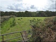 SX5598 : Trees along a field boundary (small stream) by David Smith