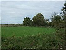 TG4001 : Grazing near Hardley Cross by JThomas