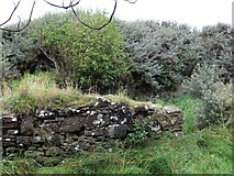 NT4884 : St Patrick's Chapel (remains of) by Andrew Curtis