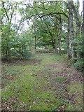 SS5402 : Bridleway south of Essworthy by David Smith
