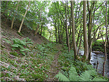 NZ0901 : Path alongside the Marske Beck by Stephen Craven