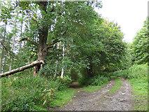 NZ0901 : Path junction below Clints Scar by Stephen Craven