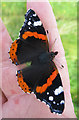 NX0940 : Red Admiral (Vanessa atalanta) by Anne Burgess