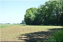 TL5334 : Rosy Grove by N Chadwick