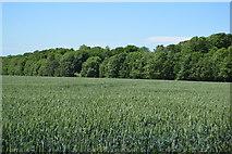 TL5334 : Waterlane Plantation by N Chadwick