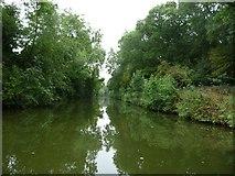 SP7288 : Market Harborough Arm, between bridges 12 and 11 by Christine Johnstone