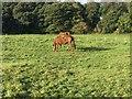 NZ3150 : Grazing Horses by Gary Fellows