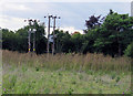 TL2238 : Electricity poles by A1 near Stotfield by Andrew Tatlow