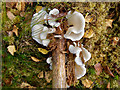 NH4557 : Forest floor - early autumn : Week 39