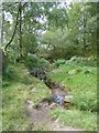 SK2576 : Stream in woods at the north of Froggatt Edge by David Smith