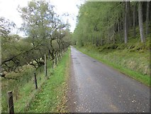 NO3462 : Road at Craig Wood by Scott Cormie