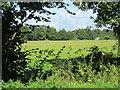 SJ3479 : View from Benty Heath Lane by Jeff Buck