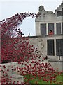 SX4753 : The wave of ceramic poppies by the naval memorial, Plymouth by David Smith