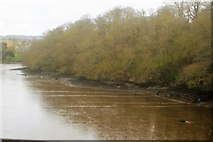 SX4561 : Wooded bank, River Tavy by N Chadwick