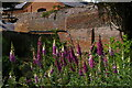 TL5238 : Foxgloves at Audley End by Christopher Hilton