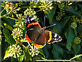 NT5634 : A Late Red Admiral At Newstead : Week 40