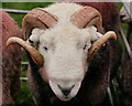 SD1599 : Eskdale Show 2017 by Peter Trimming