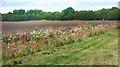 TQ0181 : Flowers by a field by Des Blenkinsopp