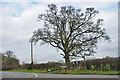 TQ3850 : Tree at junction by Robin Webster