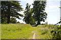 TL5338 : Saffron Trail, Audley Park by N Chadwick