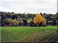 TQ4551 : Trees at Chartwell by Paul Gillett