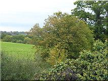 TQ3097 : View from Hadley Road by Marathon