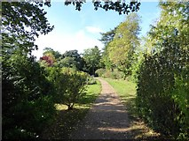 SO8845 : Path through The Shrubbery by Philip Halling