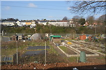SX5055 : Allotments by N Chadwick