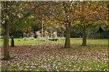 SJ7886 : Halecroft Park by Ian Greig