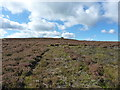 SJ1839 : Mown & regenerating heather below Y Foel's summit by Richard Law