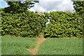 TL0048 : John Bunyan Trail through hedge by N Chadwick