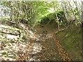 SO4387 : Sunken way near Bushmoor by Jeremy Bolwell