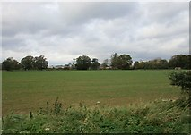 SE7576 : Fields near Great Habton by Jonathan Thacker