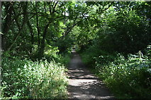 SU8496 : Footpath, Naphill Common by N Chadwick