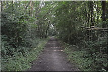 SU8495 : Footpath, Downley Common by N Chadwick