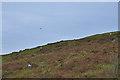 SN7169 : Hillside and kite by Nigel Brown