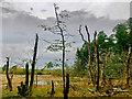 NH6159 : Hard times by Loch Culbokie : Week 42