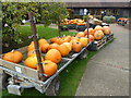 TQ5263 : Pumpkin time at Castle Farm : Week 42