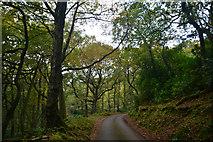 ST1736 : Sedgemoor : Cockercombe Road by Lewis Clarke