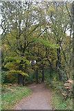 ST1636 : Sedgemoor : Woodland Path by Lewis Clarke