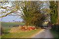 SU1327 : Dogdean Farm by Jon Alexander