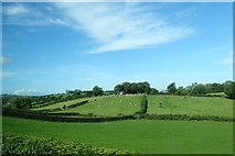 J2333 : Sheep pasturage on the north side of the A25 (Castlewellan Road) by Eric Jones